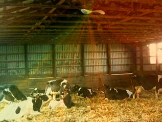 Cow Barn with modified CA-Geowave Device. (c) Davir Reecher, Annapolis & Univ.-Prof. Dr. Gerhard W. Hacker (Salzburg), 2009 ff.